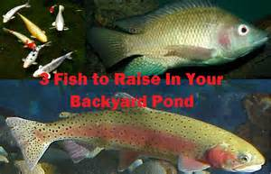 Farming In Your Backyard - 3 fish to raise in your backyard fish pond worldwide aquaculture