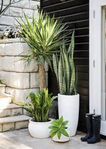best 25 front door plants ideas on front door