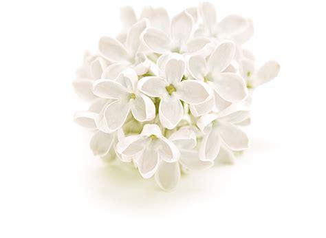 Glade Automatic White Lilac senteur lilas blanc glade senteurs