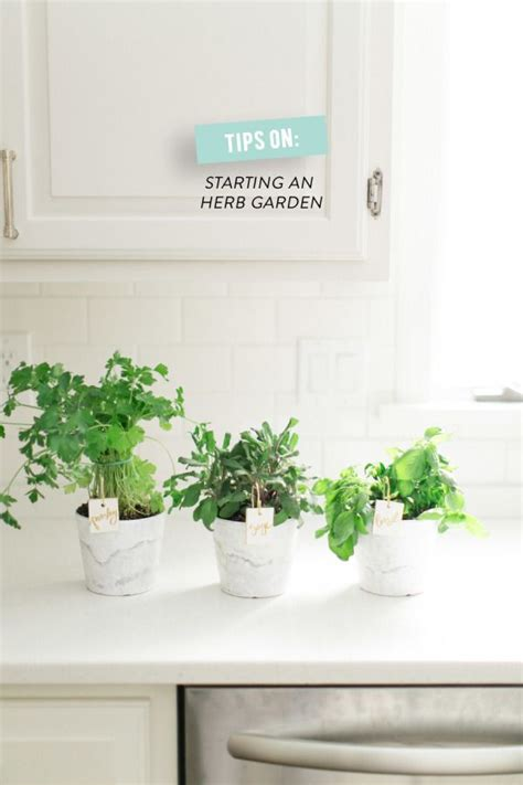 How To Start An Indoor Herb Garden by Tips On Starting An Indoor Herb Garden