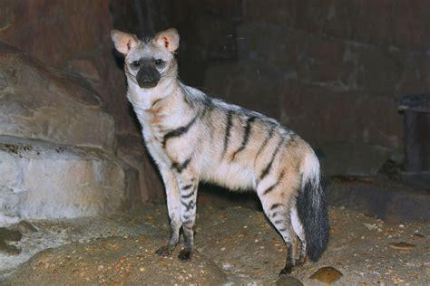 animals  pets  nyc gothamist