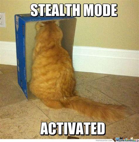 Stupid Cat Meme - cat memes funny and cute kitten memes