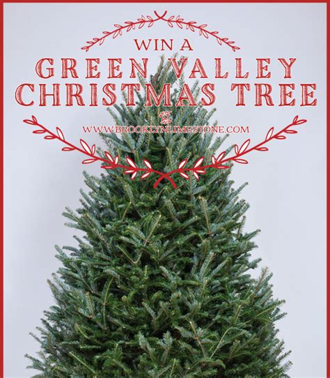 giveaway win a fresh cut christmas tree brooklyn limestone
