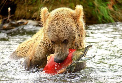 imagenes de animales herbivoros y carnivoros animales animales carnivoros x peligrosos