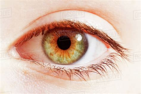 hazel color up of hazel eye stock photo dissolve