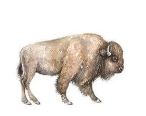Farm Wall Mural buffalo watercolor print buffalo painting southwestern