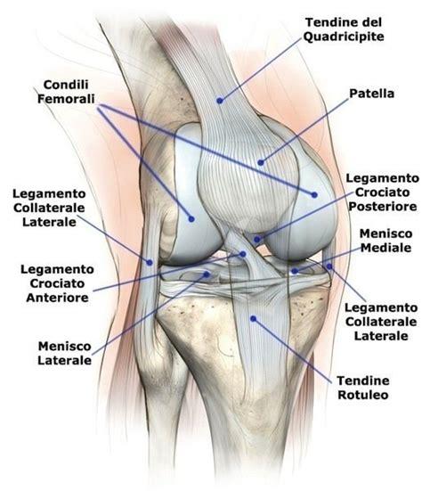 mal di ginocchio interno distorsione menisco e dei legamenti ginocchio tempi