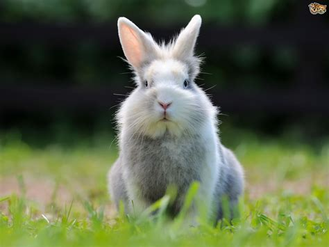 the rabbit the solution to our domesticated issues books bad rabbit behaviour some common rabbit problems