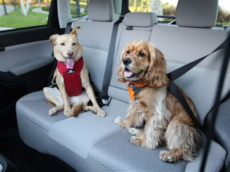 top performing dog seat belts crates  carriers