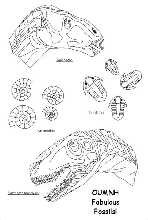 fossils coloring pages az coloring pages