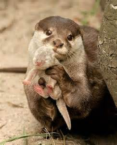 when does amazon black friday 2017 end otters pictures pics images and photos for your tattoo