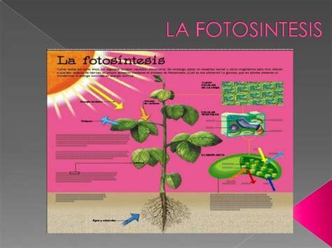 fotosintesis de las plantas 1000 images about ci 232 cies naturals i experiments on