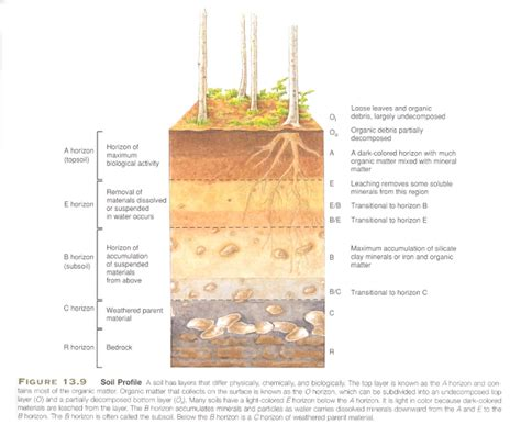 diagram of a soil profile soil profile diagram soil horizons kidspressmagazine roots