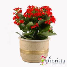 spedire fiori a casa spedire piante a domicilio con lafiorista it negozio