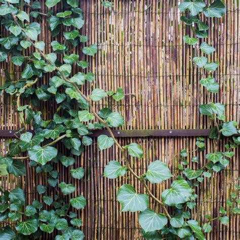 Sichtschutz Balkon Selber Machen 3706 by Sichtschutz F 252 R Den Balkon Selber Machen 187 So Geht S