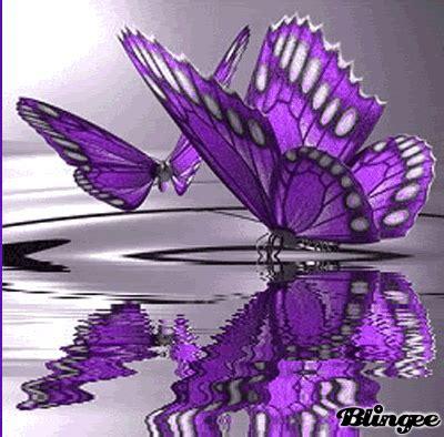 imagenes de mariposas lilas mariposa lila fotograf 237 a 115014594 blingee com