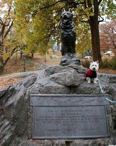 central park puppies my new york nutrish trip central park prestonspeaks