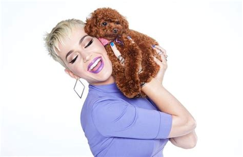 katy perry puppy katy perry s myer ad riles animal activists wwd