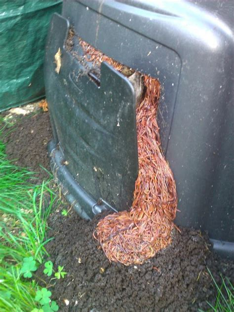 best compost worms worm composting bins gardening guide