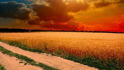 ml hot sunny day nature farm wallpaper