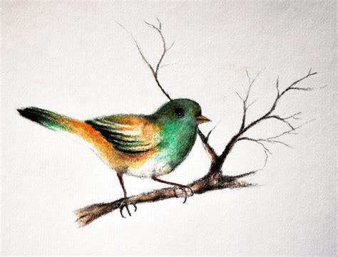 bird art drawing birds 1782212965 color pencil sketches of birds google search sketches small birds colored