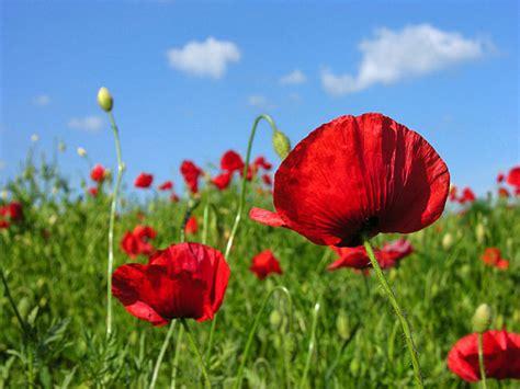 fotos muy bonitas de flores fotos de flores bonitas