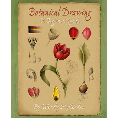 beginner s guide to botanical flower painting books botanical drawing a beginner s guide draw botanical