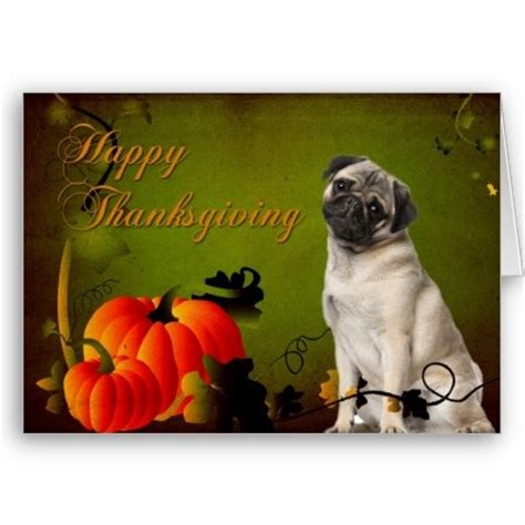 happy thanksgiving pug pug thanksgiving card