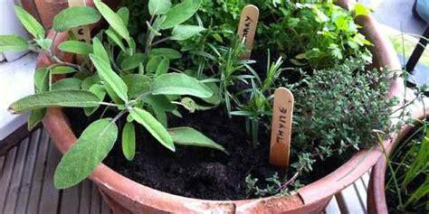 orto in vaso come realizzare un orto in vaso greenme