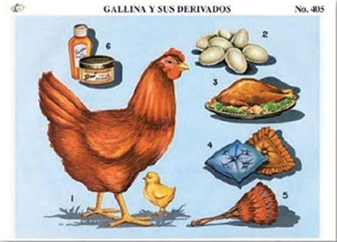 imagenes de animales y sus derivados imagenes de animales y sus derivados