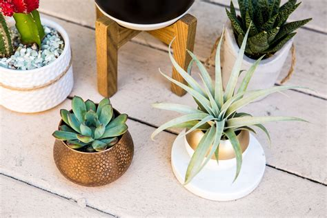 plants in home decor home decor the best indoor plants live the nekter