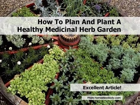 how to plan and plant a healthy medicinal herb garden
