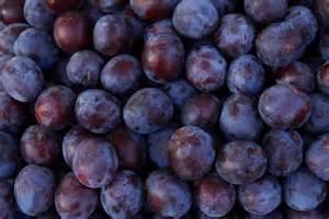 tiny s organic plum varieties