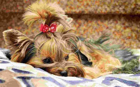 has allergies can pets allergies pets grooming