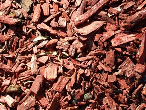 wood chips landscaping landscaping ideas 10 alternatives to grass lawns install it direct