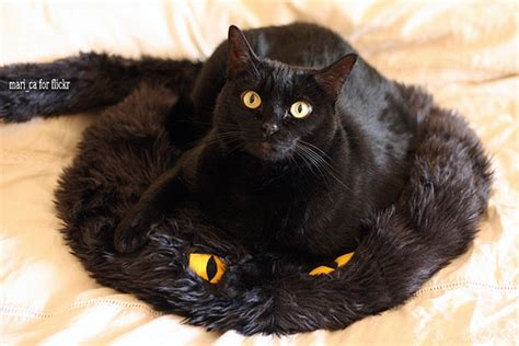 We Had Here Pillow by A Black Cat On A Black Cat Pillow We Had To Buy This