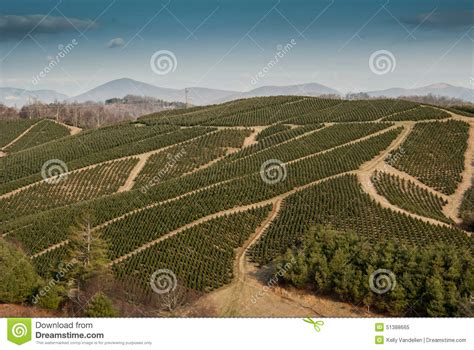 tree farms western nc tree farm in western carolina stock photo image 51388665