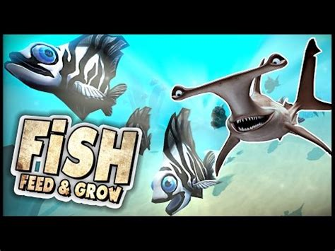 feed and grow: fish new hammerhead shark vs browurag