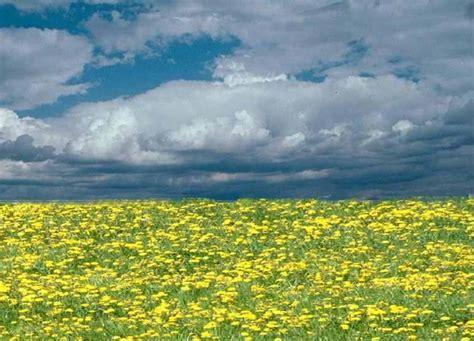 immagini prato fiorito prato fiorito foto immagini paesaggi cagna foto