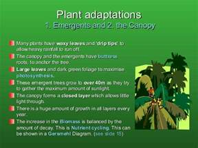 Plant Adaptation In Tropical Rainforest - rainforests