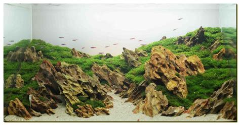 Mountain Aquascape aquascape of the month june 2012 quot mountain and river of