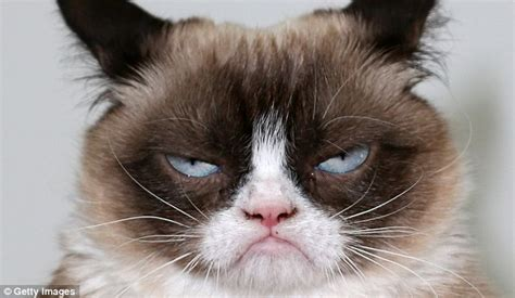 grumpy cat grumpy cat has just released second book but was
