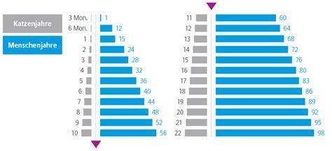 katzenjahre in menschenjahre tabelle wie alt werden katzen allianz