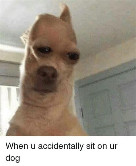 accidentally sit  ur dog dank meme  meme