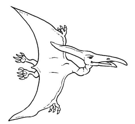How To Draw Pteranodon Coloring Page Coloring Sun Pteranodon Coloring Pages