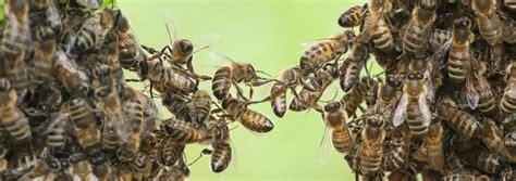 abeille assurances si鑒e social printmedien zu apitherapie kosmetik und bienenprodukte