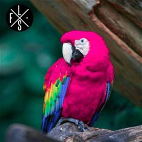 Designing A Bathroom 1000 images about pink parrot on pinterest parrots