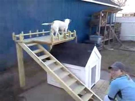 dog house with deck on top dog house double deck youtube
