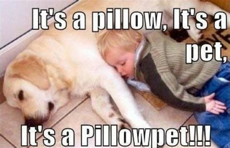 Pet Meme - pillow pet lol animal memes pinterest