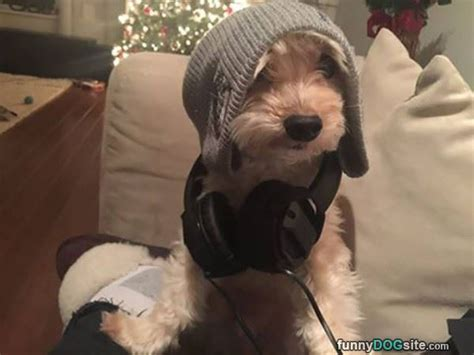 djs dogs dj funnydogsite